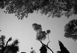 The most beautiful trees in the Villa Farnese Park, Rome