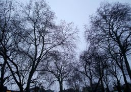 The trees in Hoxton Square, London. Photo Olivier Zham