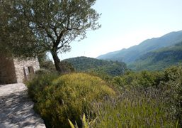 Waking up in the Luberon, near Bonnieux in André Saraiva's summer house….