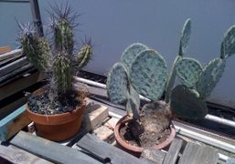 Cactus at Ed Ruscha's studio, Venice Beach, California. Photo Bill Powers