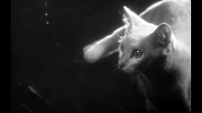 Gary Indiana TV Takeover / Private Life of a Cat (1947)