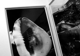 A view from Daido Moriyama at his new show Hawaii until March…