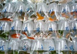 A visit to the colorful Goldfish Market on Tung Choi Street, Hong...
