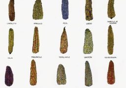 """""""All About Corn,"""" an essay by Elena Reygadas for Purple #36 the..."""
